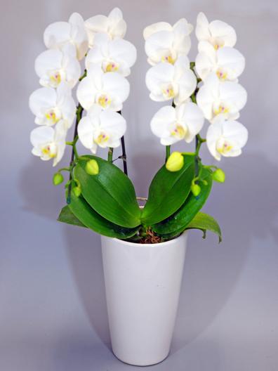 鉢花(鉢植え・寄せ植え)