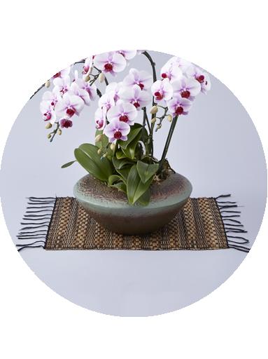 丸みを帯びた和鉢