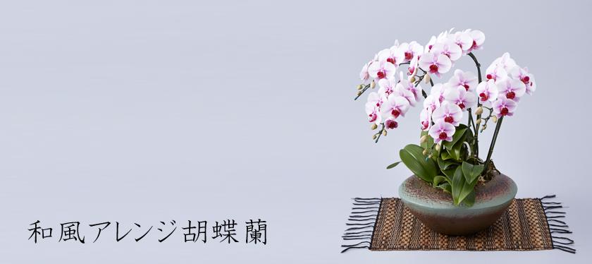 和風アレンジ胡蝶蘭