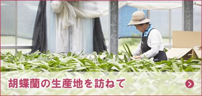 胡蝶蘭の生産地を訪ねて