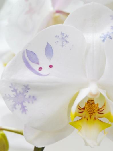 化粧蘭イメージ(雪と雪うさぎ)