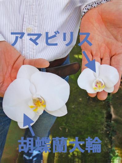 お花の大きさ
