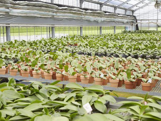 胡蝶蘭の苗専用のハウス