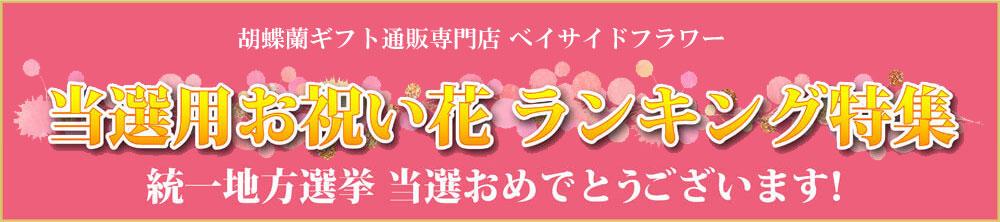 当選祝いに!人気の胡蝶蘭お祝い花ギフトランキング特集 胡蝶蘭ギフト専門店ベイサイドフラワー
