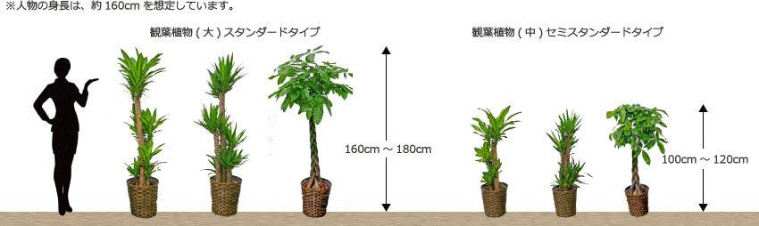 観葉植物バスケットタイプのサイズ比較