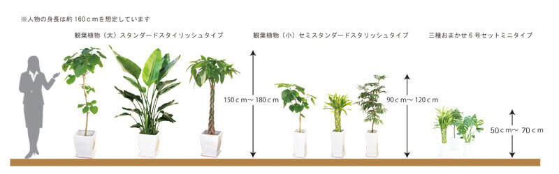 観葉植物陶器鉢タイプ