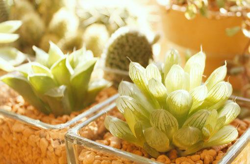 御祝いに喜ばれる観葉植物ギフト 誕生日・出産祝い