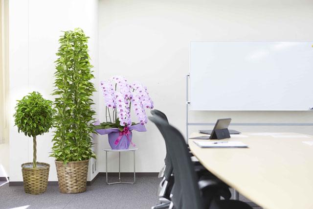 オフィスに置くと素敵な観葉植物