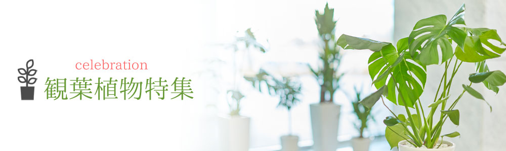 人に優しい観葉植物