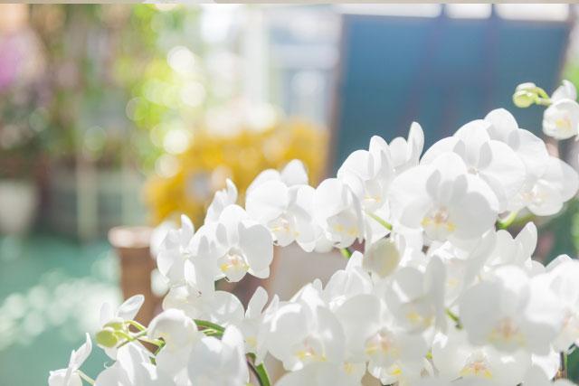 お歳暮の価格帯と人気のお花