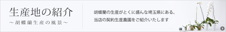 生産地の紹介~胡蝶蘭生産の風景~