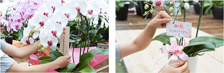 胡蝶蘭と木札、カード