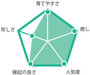 観葉植物アレカヤシ グラフ