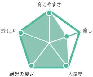 観葉植物カシワバゴム グラフ