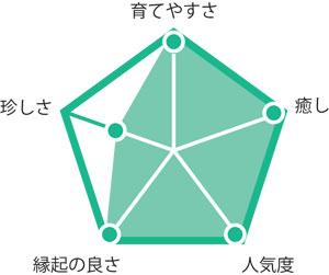 観葉植物パキラ グラフ