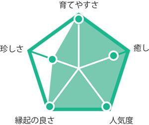 観葉植物ユッカ グラフ