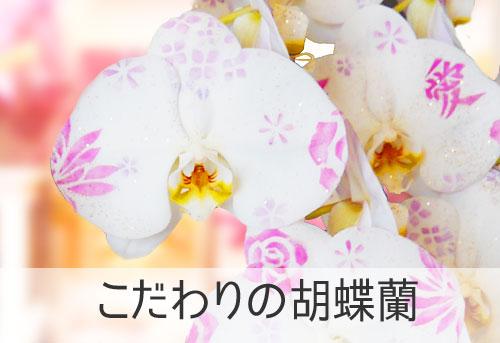 こだわりの胡蝶蘭