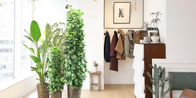 バスケット観葉植物