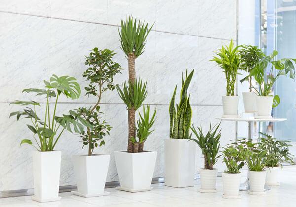 観葉植物スタイリッシュタイプ陶器鉢