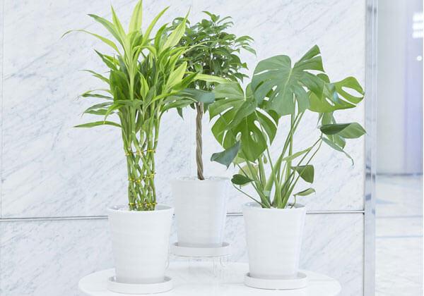 観葉植物生産地おまかせのセットミニタイプ