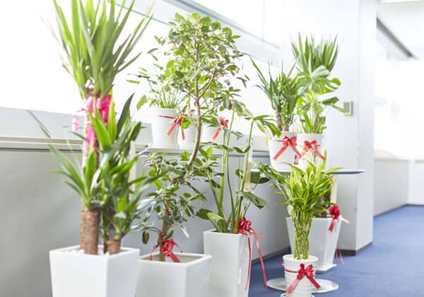 陶器鉢の観葉植物の育て方