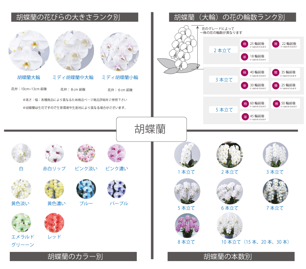 胡蝶蘭選びガイド