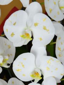 デコレーション化粧蘭の一例です。